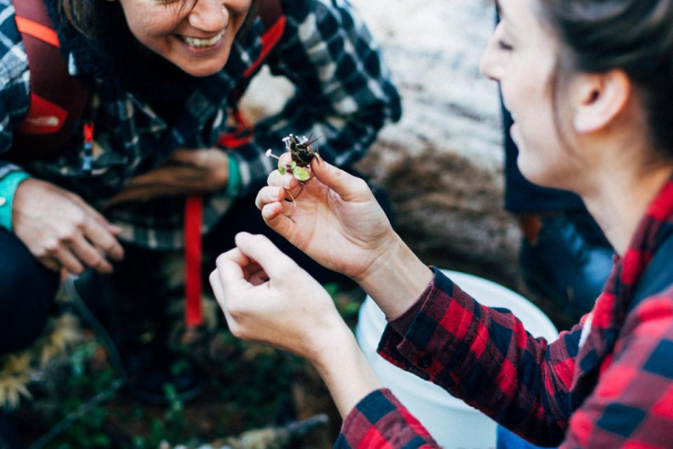 Foraging mushrooms